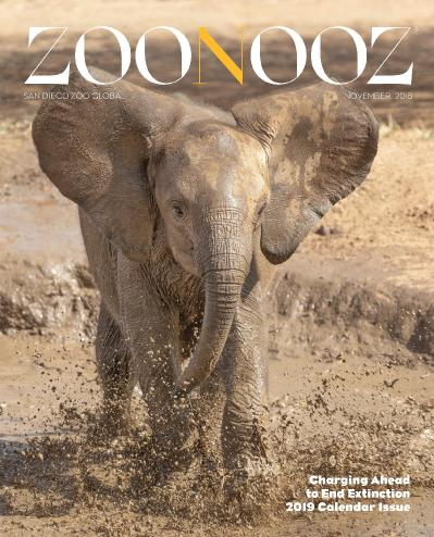 Zoonooz Magazine   November (2018)