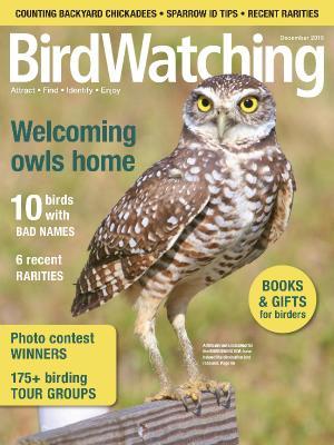 BirdWatching USA - November-December (2019)